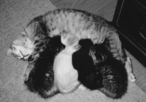 猫20110317
