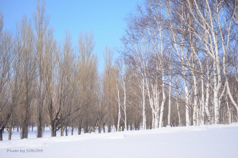前田森林公園1