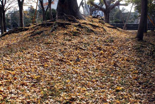 いっぱいの落ち葉の中に