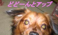 アリアの画像 099-1