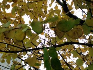 季節は秋に