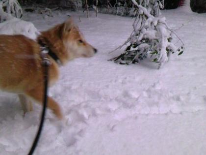 2012雪1