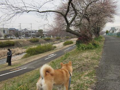 2012春雨2