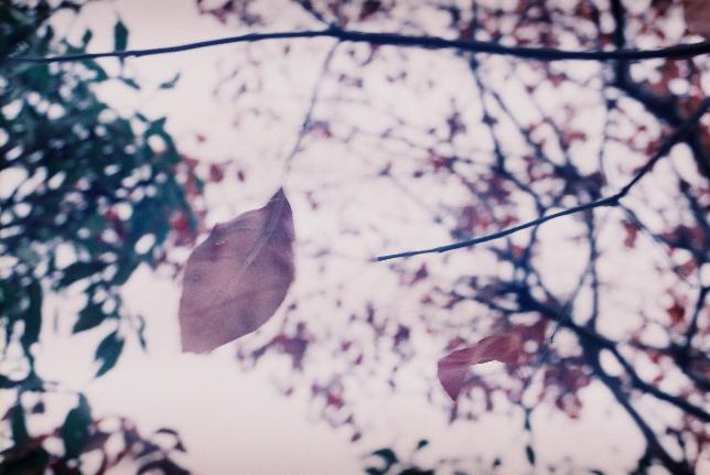 葉 Fmiさんカメラ
