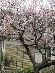 2011_04_11_04.jpg