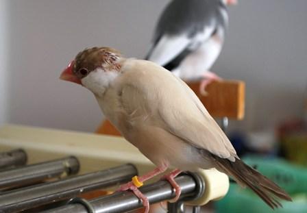 蓮斗の換羽