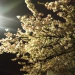 sakura_convert_20110221184719.jpg