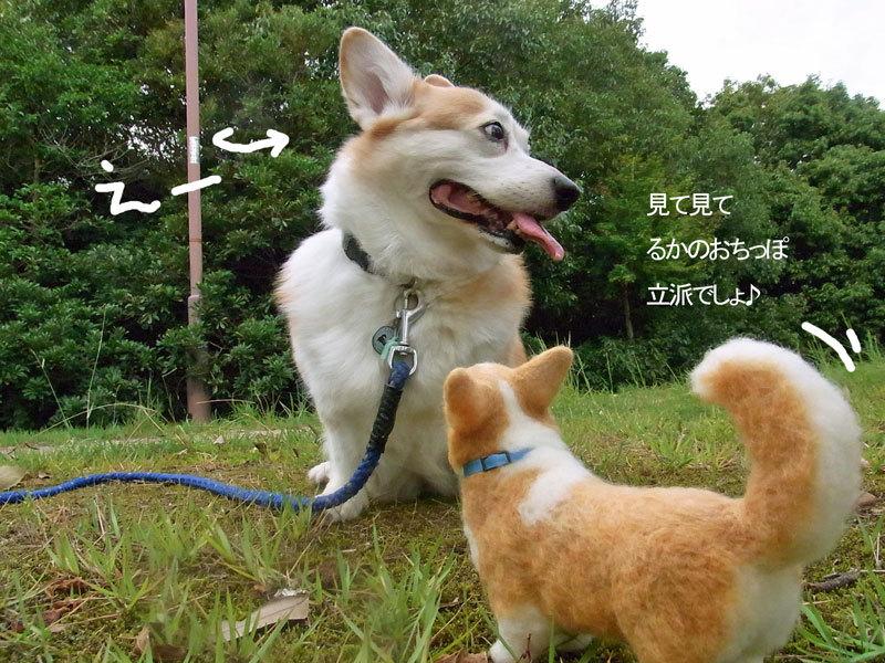 $あしあと工房 in 神戸波止場町TEN×TEN-ルカと羊毛ルカ1