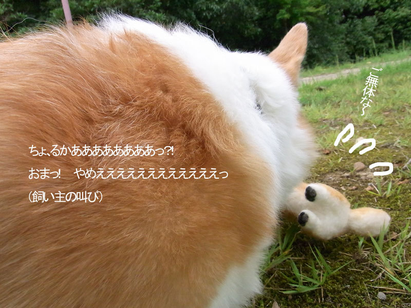 $あしあと工房 in 神戸波止場町TEN×TEN-ルカと羊毛ルカ2