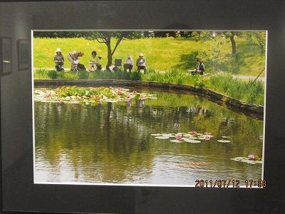 睡蓮咲く池 写真 玉置正