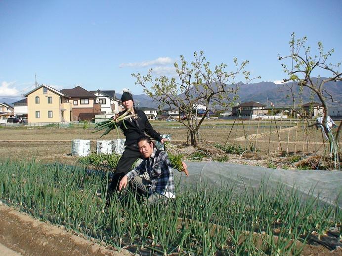 無添加無農薬自然食品有機栽培の畑と米