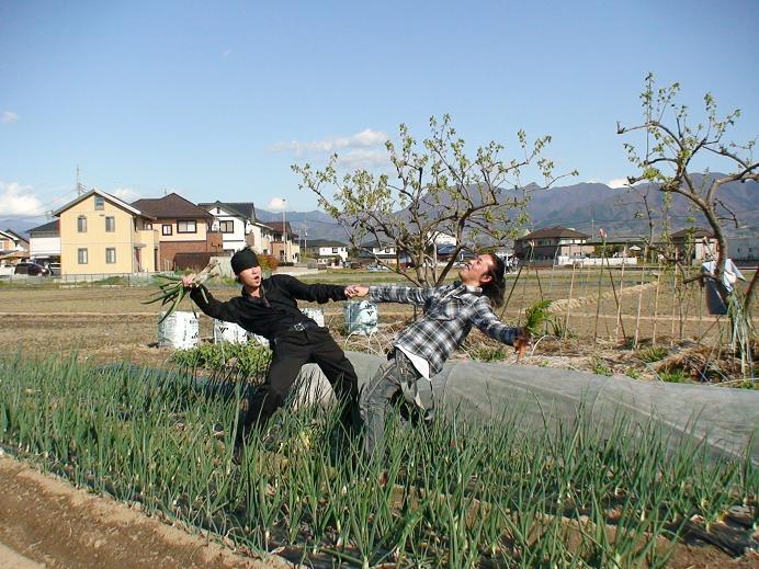 マクロビ無農薬有機栽培野菜と平島米
