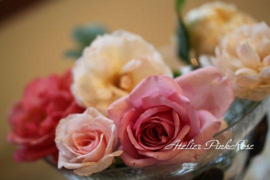 23 今日の薔薇