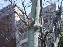 耳の樹02