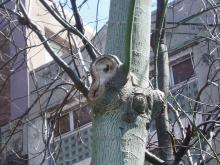 耳の樹03