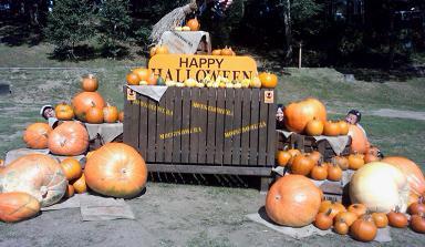 2011.9かぼちゃ