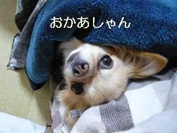 blog2013012303.jpg