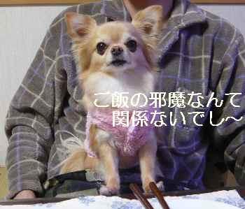 blog2013012803.jpg