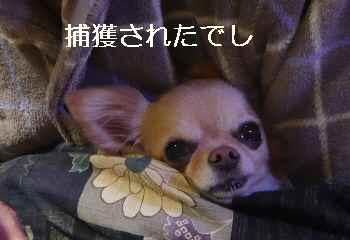blog2013012804.jpg