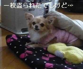 blog2013013002.jpg