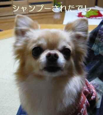 blog2013020904.jpg