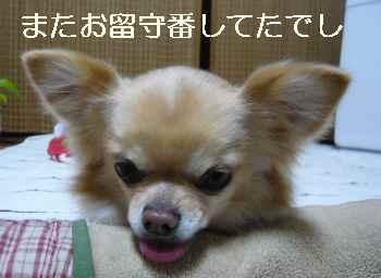 blog2013021003.jpg