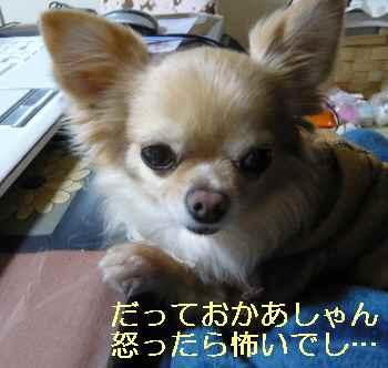 blog2013022203.jpg