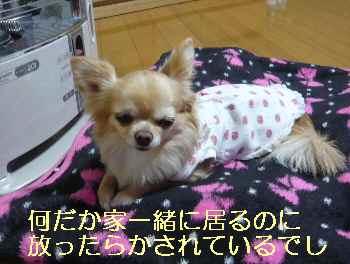 blog2013022706.jpg
