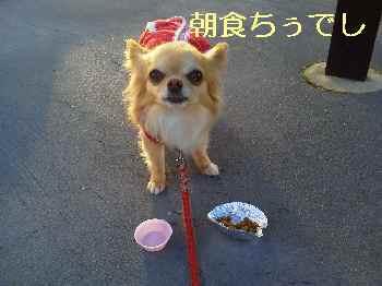 blog2013030401.jpg