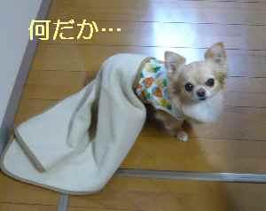 blog2013030902.jpg