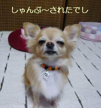 blog2013092802.jpg