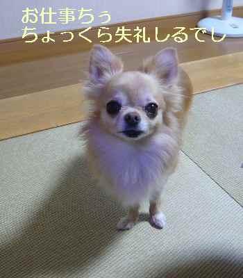 blog2013093002.jpg