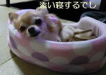 blog2013102104.jpg