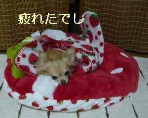 blog2013102715.jpg