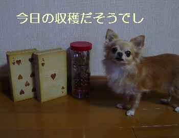 blog201310606.jpg