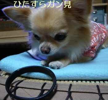 blog2013110405.jpg