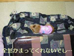blog2013110709.jpg