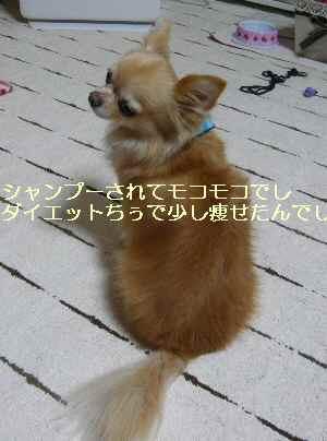blog2013110906.jpg