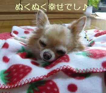 blog2013111302.jpg
