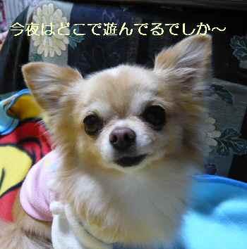blog2013111403.jpg