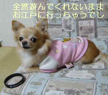 blog2013111404.jpg