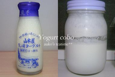 yogurutocobo01.jpg