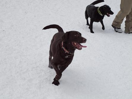 雪遊び-1