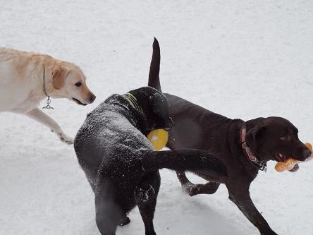 雪遊び-9