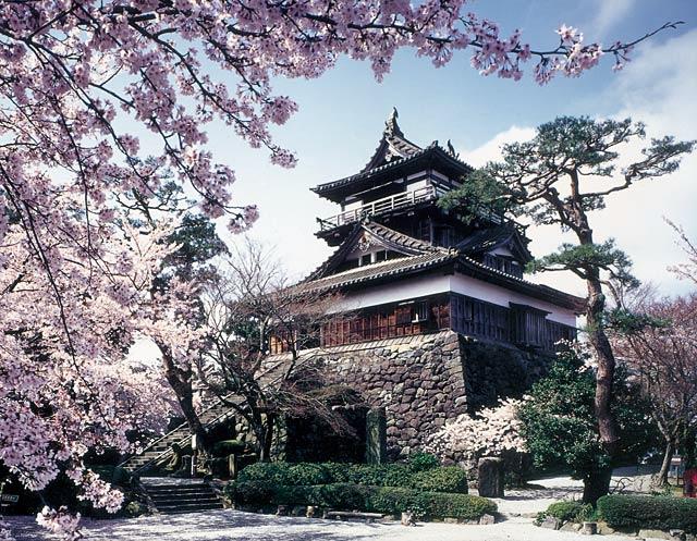 桜祭りの丸岡城