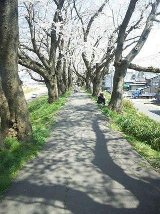 足羽川堤防を歩く