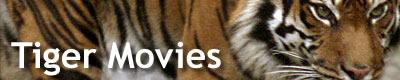 Tiger  Gallery