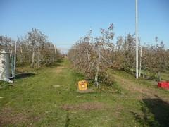 リンゴ収穫終了