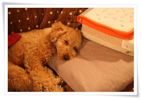 安眠学習中