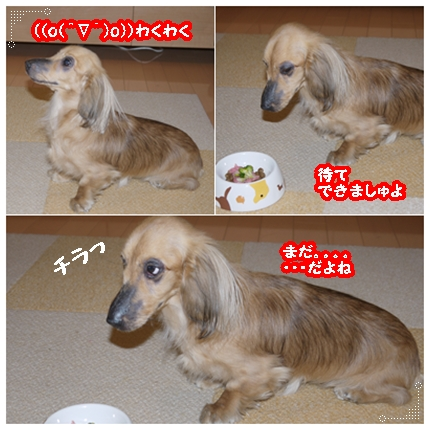 cats_20101226192707.jpg